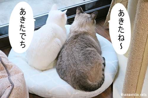 f:id:sangoruka_cats:20181013205109j:plain