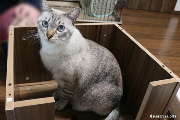 f:id:sangoruka_cats:20181013205110j:plain
