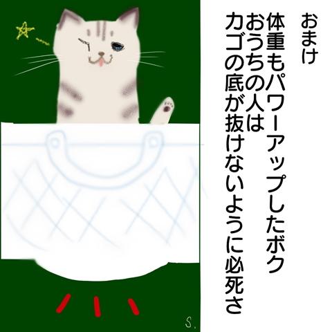 f:id:sangoruka_cats:20181103180845j:plain