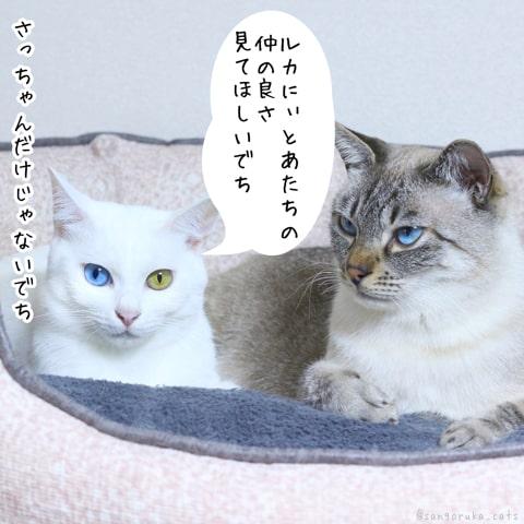 f:id:sangoruka_cats:20181213190721j:plain
