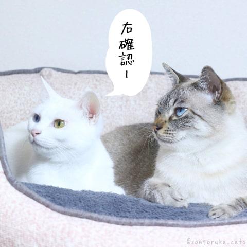 f:id:sangoruka_cats:20181213190722j:plain
