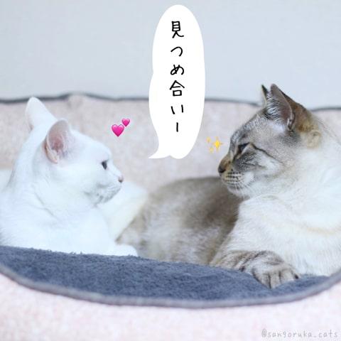 f:id:sangoruka_cats:20181213190724j:plain