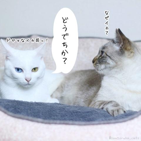f:id:sangoruka_cats:20181213190725j:plain