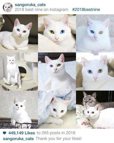 f:id:sangoruka_cats:20190106001236j:plain