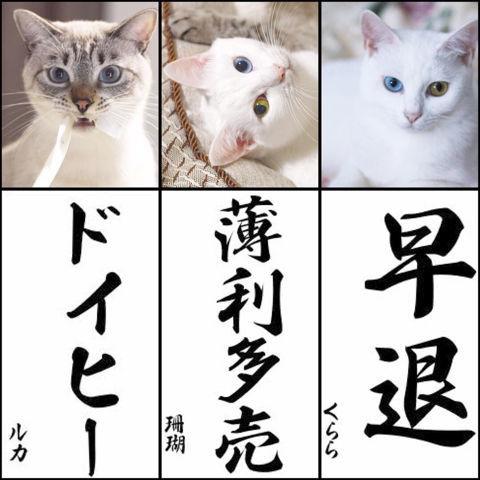 f:id:sangoruka_cats:20190106001238j:plain