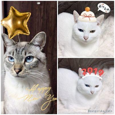 f:id:sangoruka_cats:20190106001246j:plain