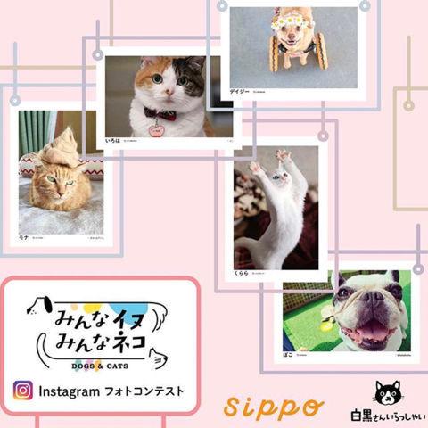 f:id:sangoruka_cats:20190106012601j:plain