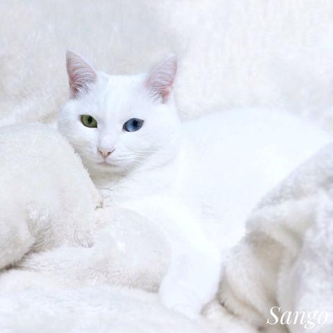 f:id:sangoruka_cats:20190127183039j:plain