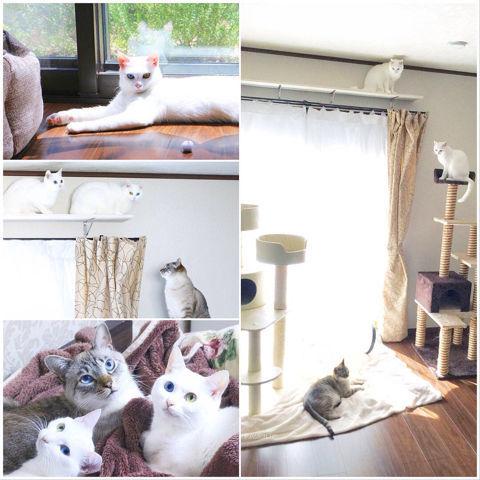 f:id:sangoruka_cats:20190127183042j:plain
