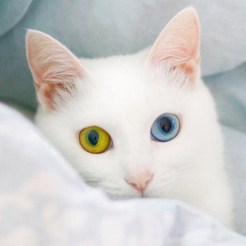 f:id:sangoruka_cats:20190127183044j:plain