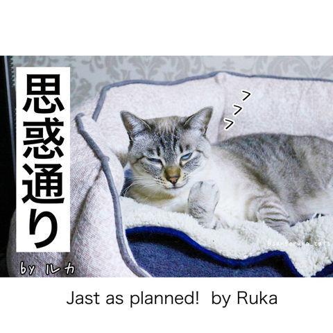 f:id:sangoruka_cats:20190127183045j:plain