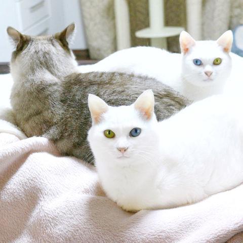 f:id:sangoruka_cats:20190127183047j:plain