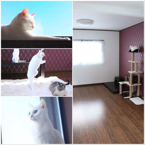 f:id:sangoruka_cats:20190127190705j:plain