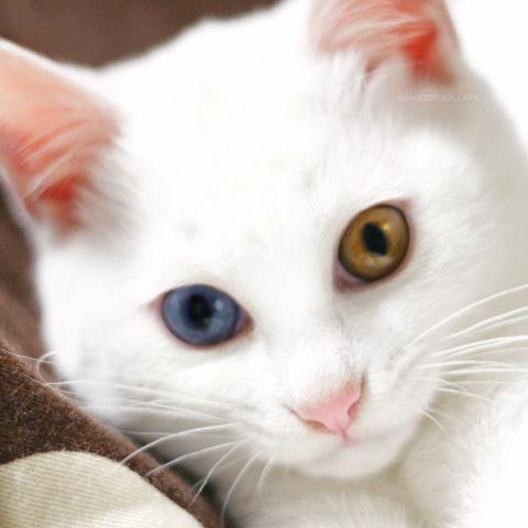 f:id:sangoruka_cats:20190203221500j:plain