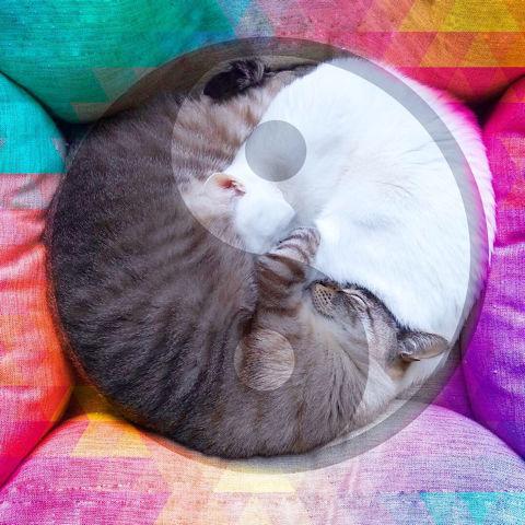 f:id:sangoruka_cats:20190203221501j:plain
