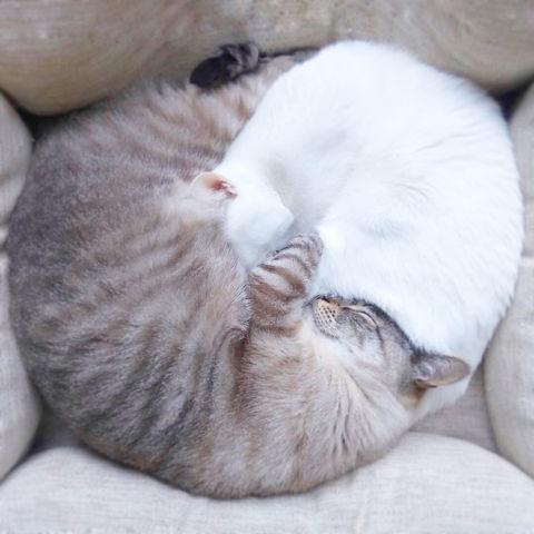 f:id:sangoruka_cats:20190203221502j:plain