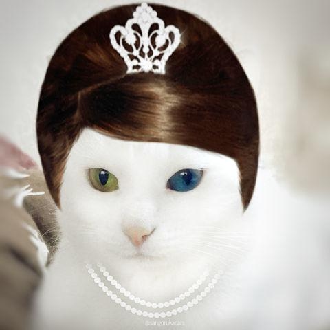 f:id:sangoruka_cats:20190203221504j:plain