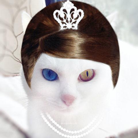 f:id:sangoruka_cats:20190203221505j:plain