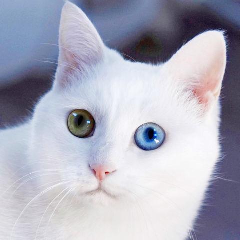 f:id:sangoruka_cats:20190210214738j:plain