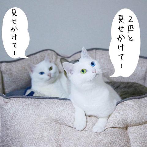 f:id:sangoruka_cats:20190210214739j:plain
