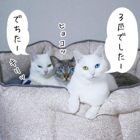f:id:sangoruka_cats:20190210214740j:plain
