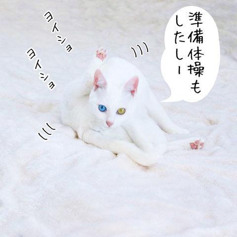 f:id:sangoruka_cats:20190210214741j:plain