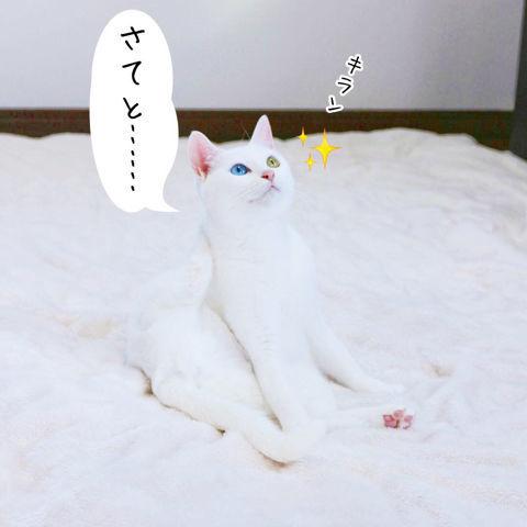 f:id:sangoruka_cats:20190210214742j:plain