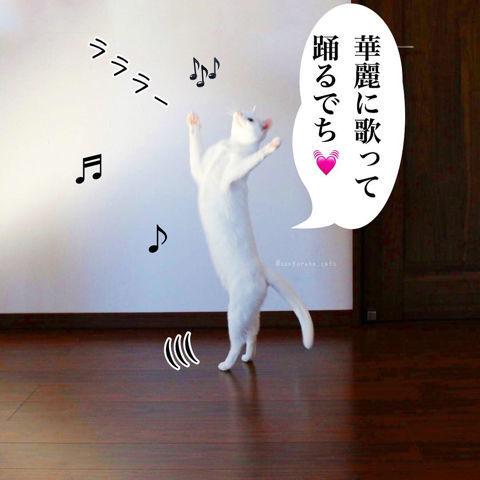 f:id:sangoruka_cats:20190210214743j:plain