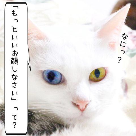 f:id:sangoruka_cats:20190210214744j:plain
