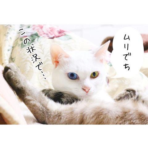 f:id:sangoruka_cats:20190210214745j:plain