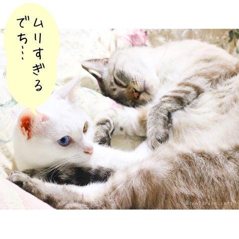 f:id:sangoruka_cats:20190210214746j:plain