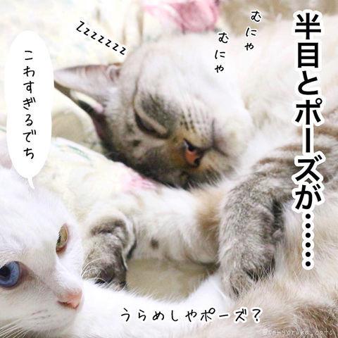 f:id:sangoruka_cats:20190210214747j:plain