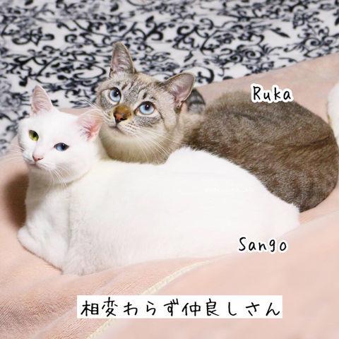 f:id:sangoruka_cats:20190210214748j:plain