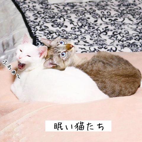 f:id:sangoruka_cats:20190210214749j:plain