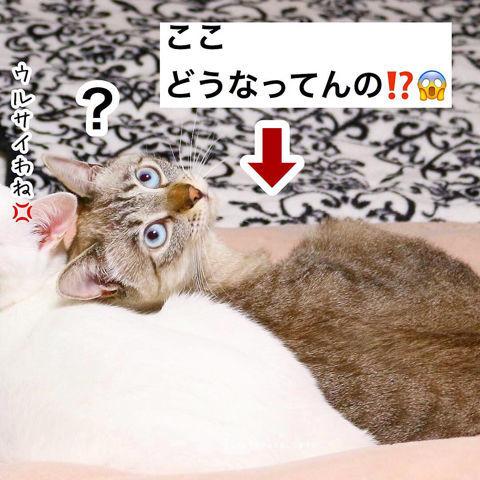f:id:sangoruka_cats:20190210214750j:plain