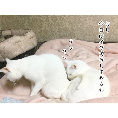 f:id:sangoruka_cats:20190216220601j:plain