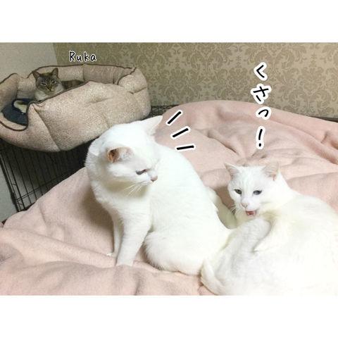 f:id:sangoruka_cats:20190216220602j:plain