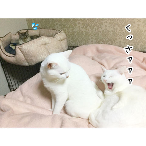 f:id:sangoruka_cats:20190216220603j:plain