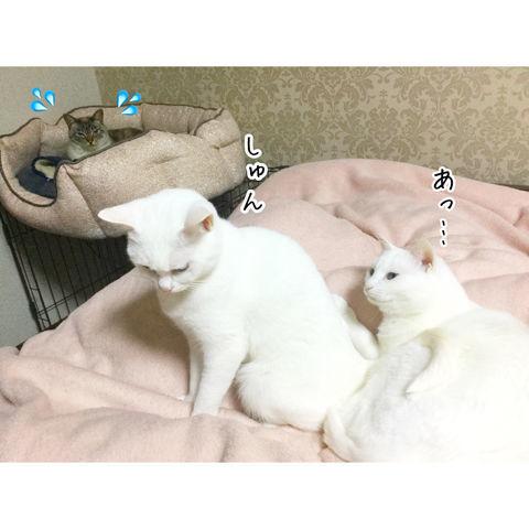 f:id:sangoruka_cats:20190216220604j:plain