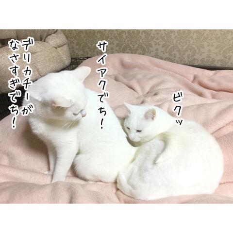 f:id:sangoruka_cats:20190216220605j:plain