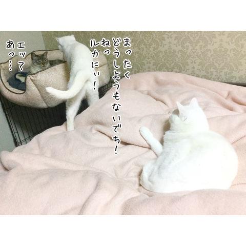 f:id:sangoruka_cats:20190216220606j:plain