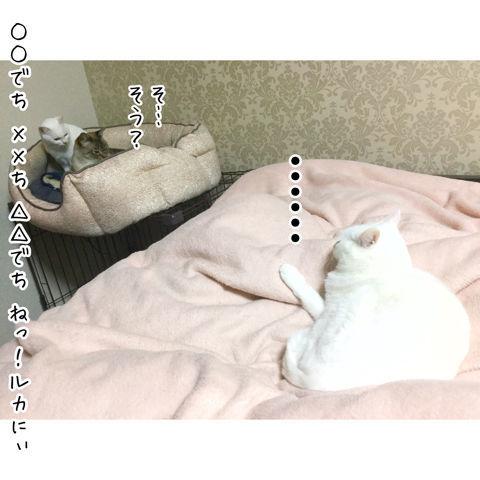 f:id:sangoruka_cats:20190216220607j:plain