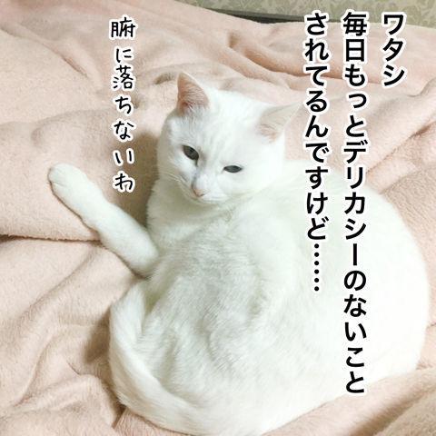 f:id:sangoruka_cats:20190216220608j:plain