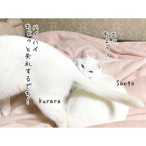 f:id:sangoruka_cats:20190216220609j:plain