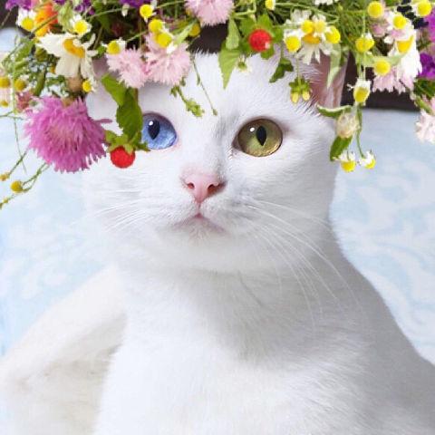 f:id:sangoruka_cats:20190218092741j:plain