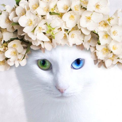 f:id:sangoruka_cats:20190218092742j:plain
