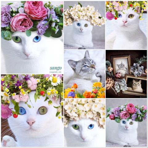 f:id:sangoruka_cats:20190218092743j:plain