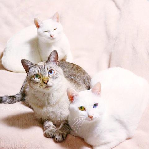 f:id:sangoruka_cats:20190218092744j:plain