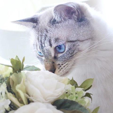 f:id:sangoruka_cats:20190218092746j:plain
