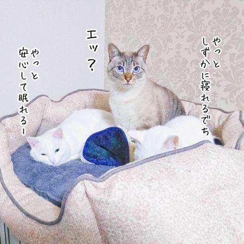 f:id:sangoruka_cats:20190221083139j:plain